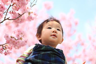 初めての桜_c0245240_10341889.jpg