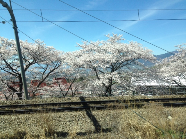 車窓からお花見_f0019247_10532931.jpg
