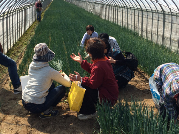 2015年3月8日博多万能ねぎ収穫体験ツアー_b0206253_16183031.jpg
