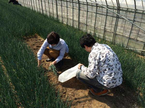 2015年3月8日博多万能ねぎ収穫体験ツアー_b0206253_1618924.jpg