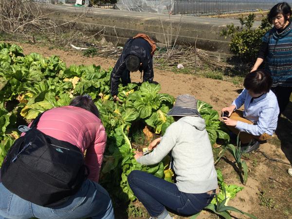 2015年3月8日博多万能ねぎ収穫体験ツアー_b0206253_16192544.jpg