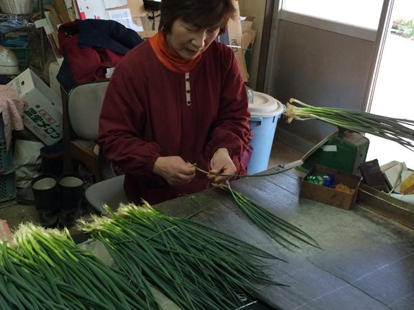 2015年3月8日博多万能ねぎ収穫体験ツアー_b0206253_16205834.jpg