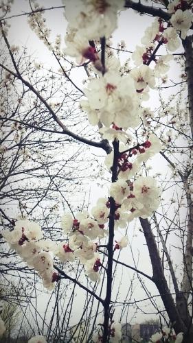 春ですね~_c0357454_13320434.jpg