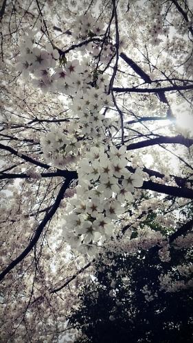 春ですね~_c0357454_13320469.jpg