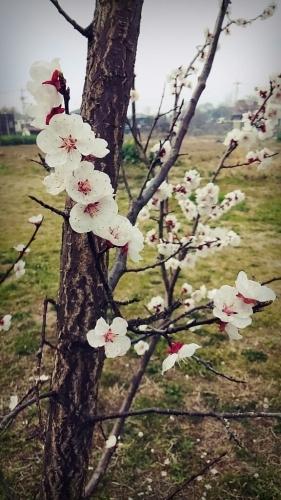 春ですね~_c0357454_13320470.jpg
