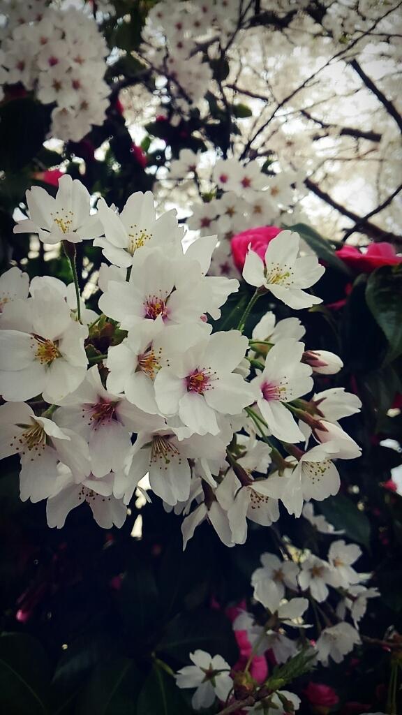 春ですね~_c0357454_13320476.jpg