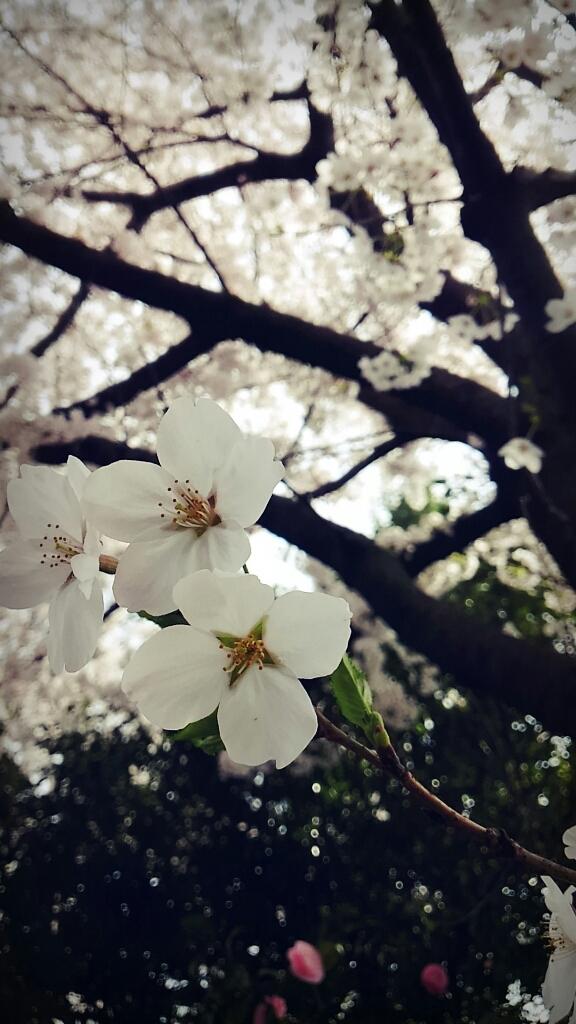 春ですね~_c0357454_13320505.jpg
