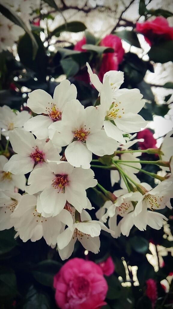 春ですね~_c0357454_13320522.jpg