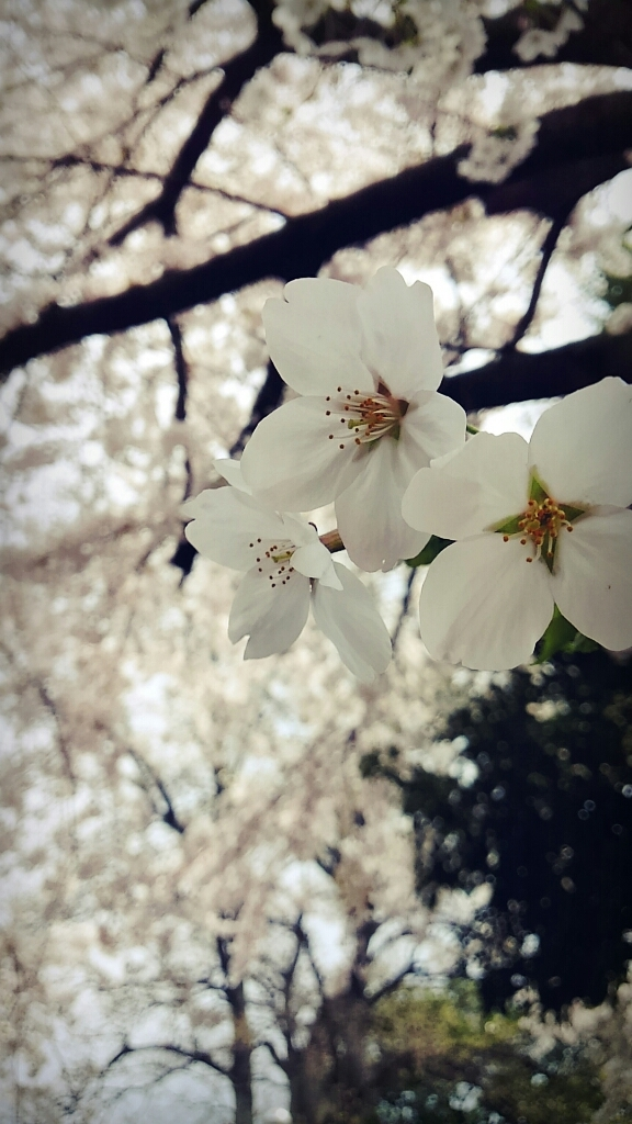 春ですね~_c0357454_13320526.jpg