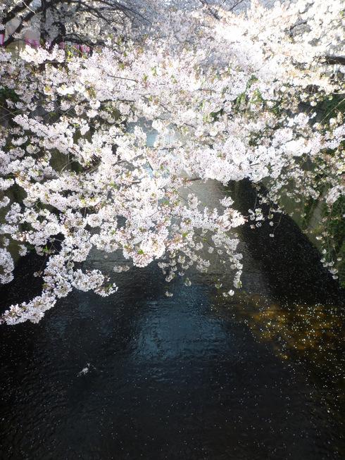 可憐な桜 と 祈りに満ちる 聖金曜日。。。Good Friday 。。。 *。:☆.。†_a0053662_2238272.jpg