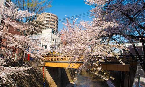 桜も終わりですね_a0155464_12342891.jpg