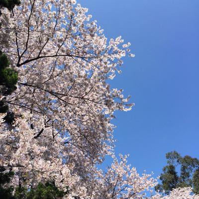 お花見@小石川植物園_d0064366_10213047.jpg