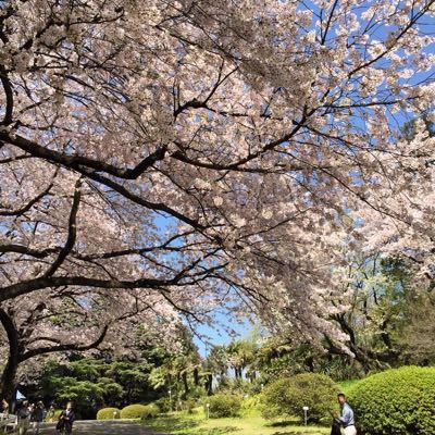 お花見@小石川植物園_d0064366_102132100.jpg