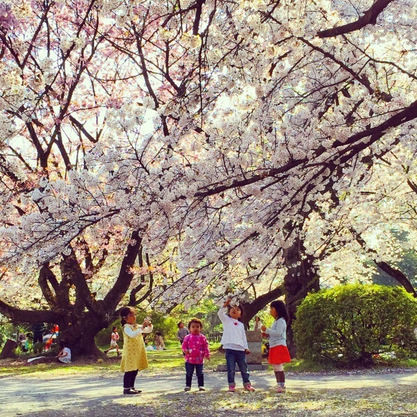 お花見@小石川植物園_d0064366_18395401.jpg