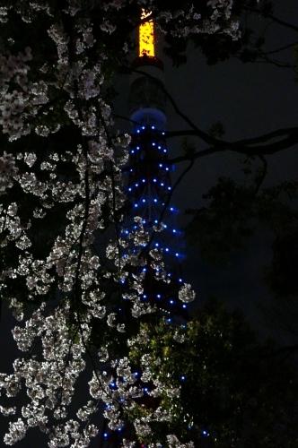 さくらと東京タワー・・・_c0331973_10384046.jpg