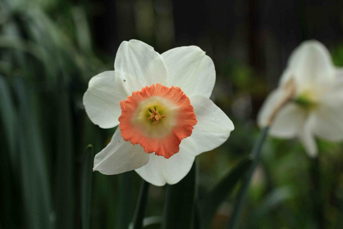 庭のスミレたちと。。。_a0107574_19524810.jpg