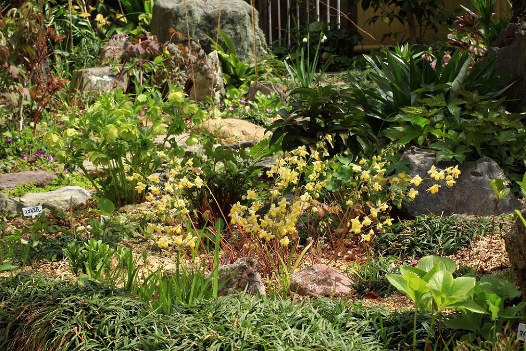 庭のスミレたちと。。。_a0107574_20515509.jpg