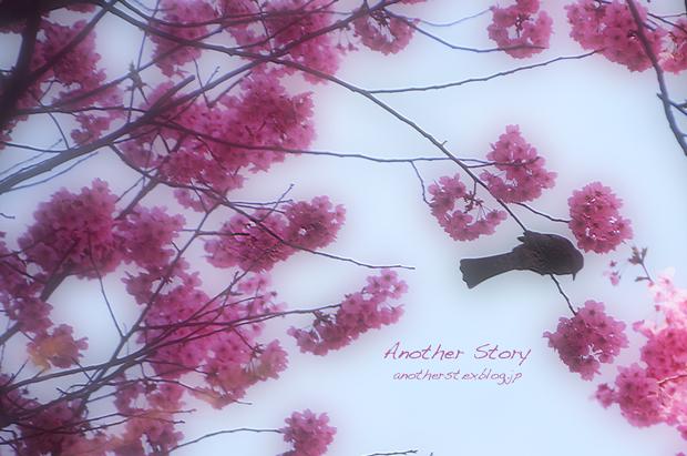 sakura sakura_a0238574_01111250.jpg