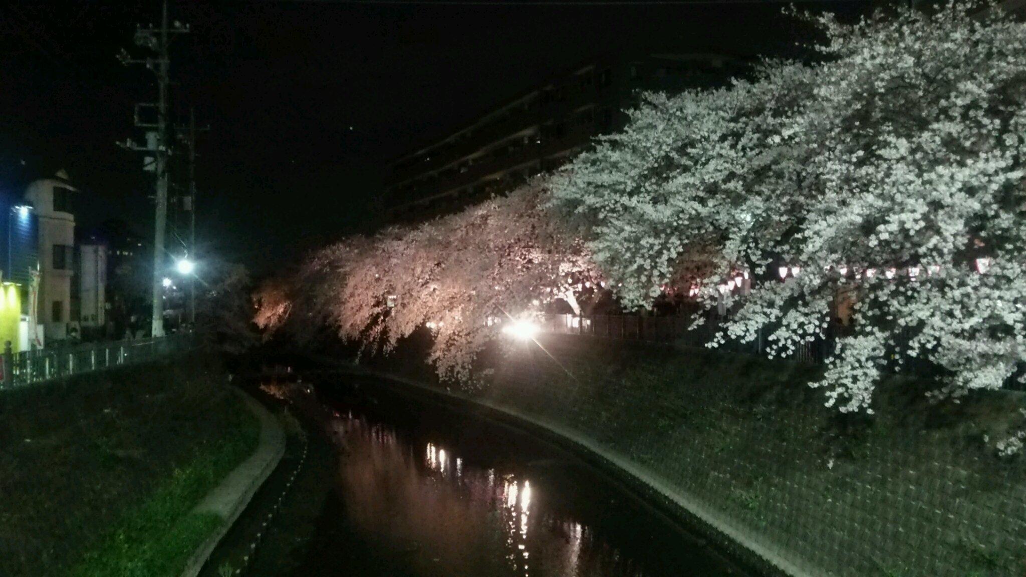 弘明寺の桜を観て「キッチン静」へ。_e0119092_11543123.jpg