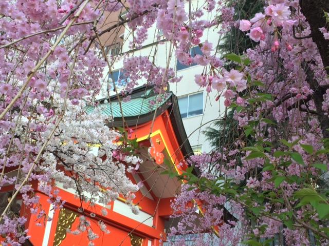 2015年の桜(10)_b0129897_3224183.jpg
