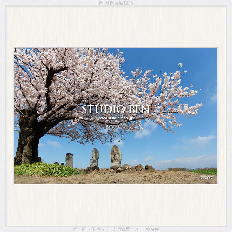 今年は どんな桜を撮りましたか?_c0210599_18543729.jpg