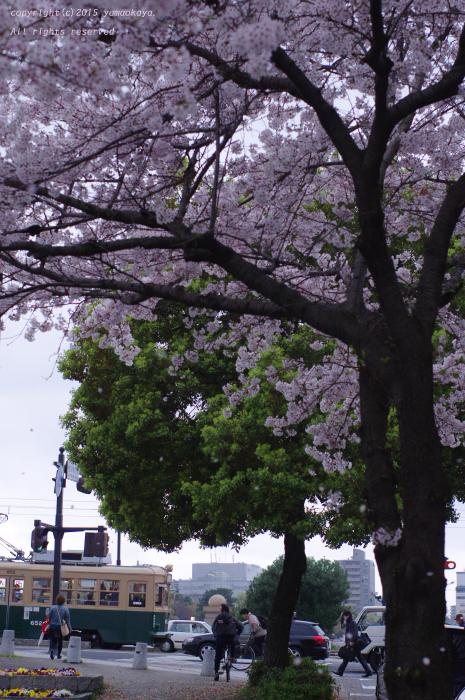 早すぎた桜吹雪_d0309612_030976.jpg