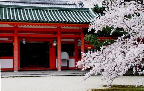 平安神宮 2015 さくら情報23_e0048413_21425035.jpg