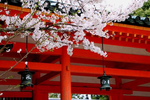 平安神宮 2015 さくら情報23_e0048413_214381.jpg