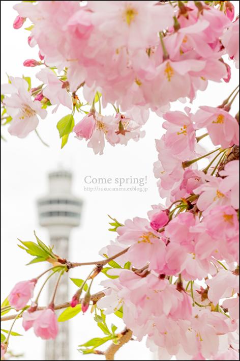 春よこい!_f0100215_23294524.jpg
