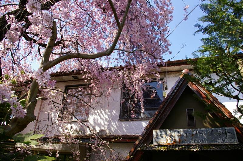 北白川の桜_f0227828_19313651.jpg