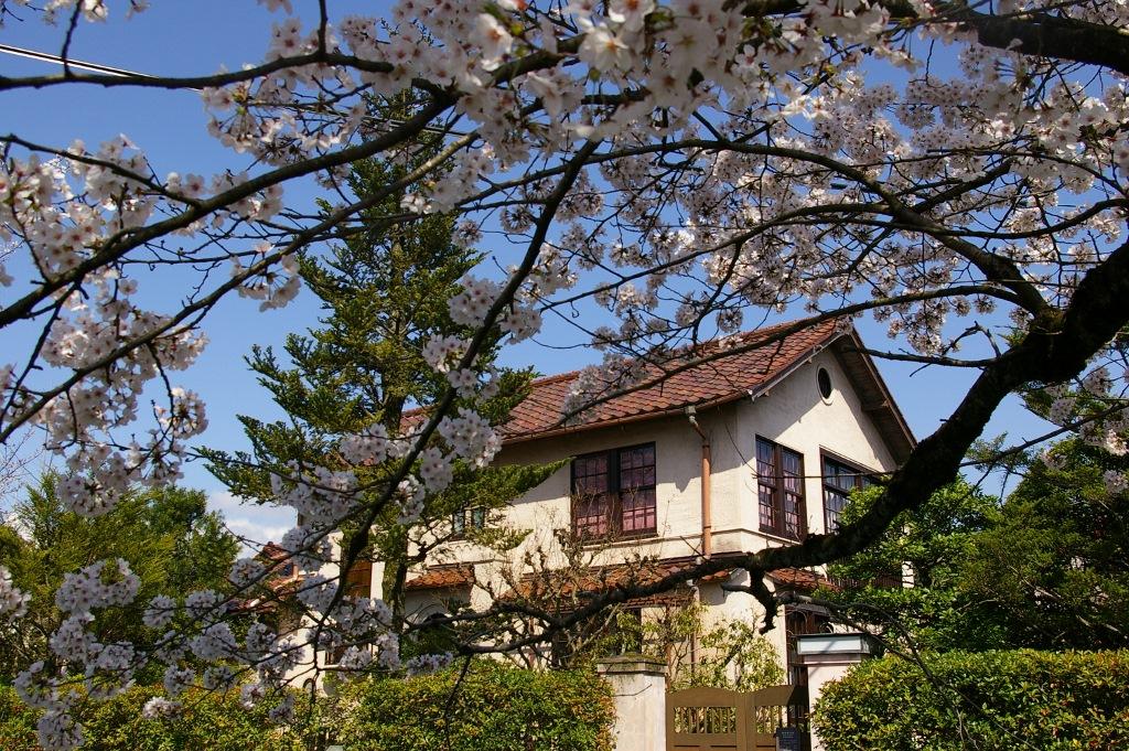 北白川の桜_f0227828_19343262.jpg