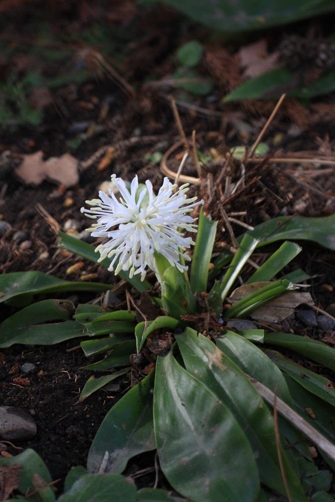 春が_c0111229_1954259.jpg