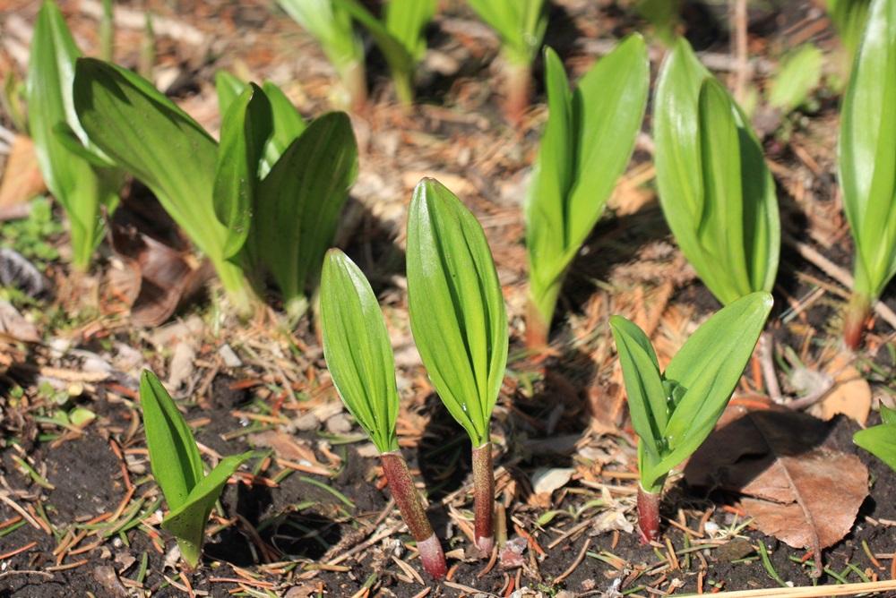 春が_c0111229_1955425.jpg