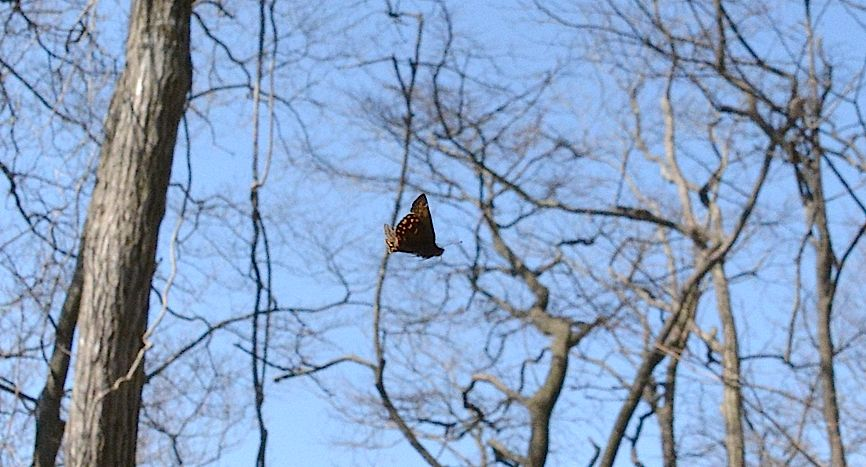 早春の蝶たち(2015年4月4日) _d0303129_44035.jpg