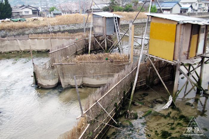 451 安浦町 ~シロウオ漁~_c0211532_216887.jpg