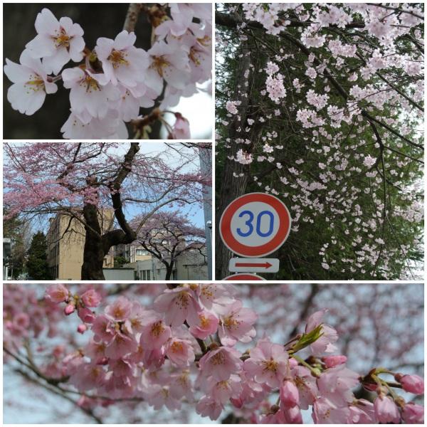 朝の散歩_c0063348_910345.jpg