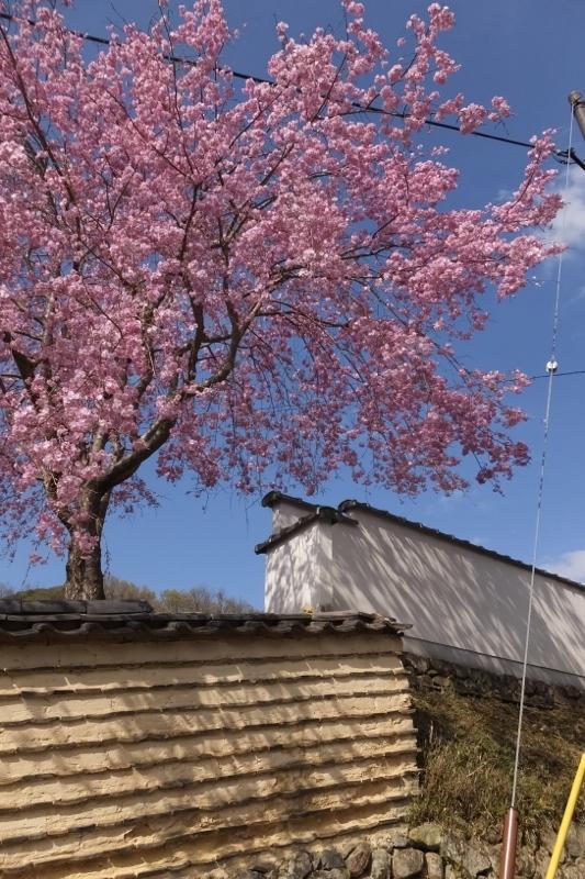 春の大和路_f0156448_18053857.jpg