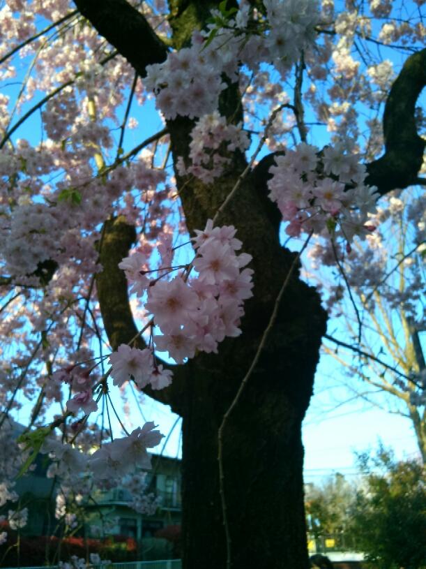 春、華々_e0173350_13293299.jpg