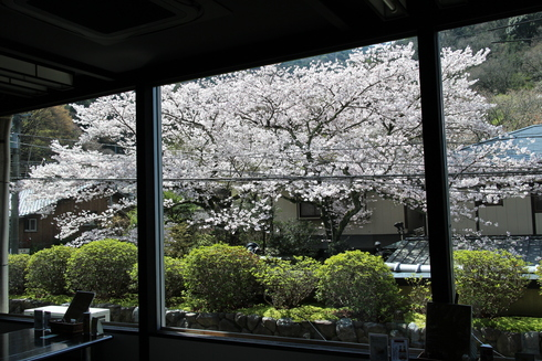 桜実況中継_c0078659_1122887.jpg