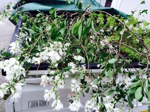 春爛漫♪_e0251361_12072800.jpg