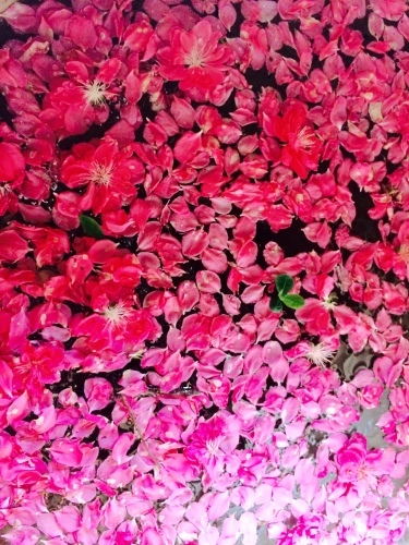 春爛漫♪_e0251361_12081881.jpg