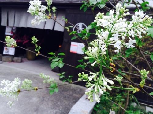 春爛漫♪_e0251361_12083136.jpg