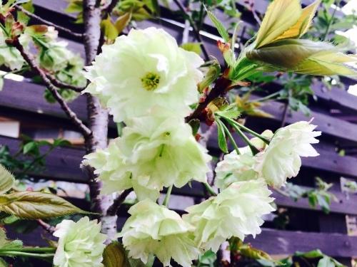 春爛漫♪_e0251361_12084436.jpg