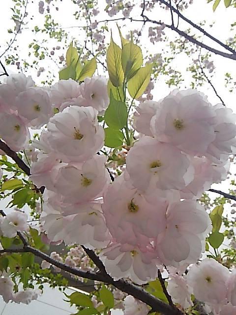 聖土曜日 Holy Saturday と Malutaへの旅。。。Have a good Easter Week。*。:☆.。†_a0053662_16141641.jpg