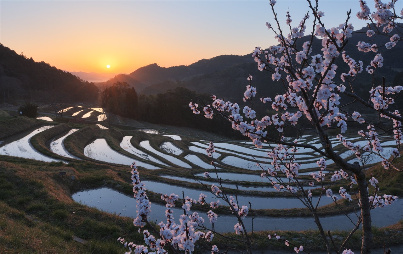 梅の花の咲く頃 ~仲春の大山千枚田~ 2_f0018464_7221966.jpg