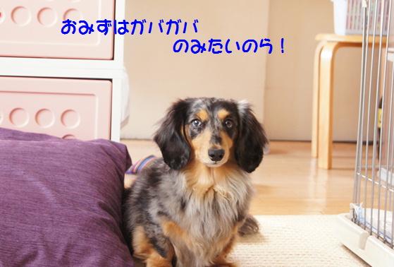 夢と近況_f0195891_2095512.jpg