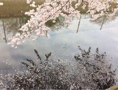 桜_f0087202_15162912.jpg