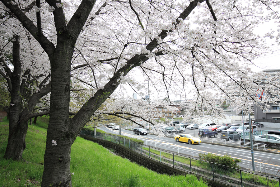 桜とイエローポルシェ_b0043304_0104665.jpg