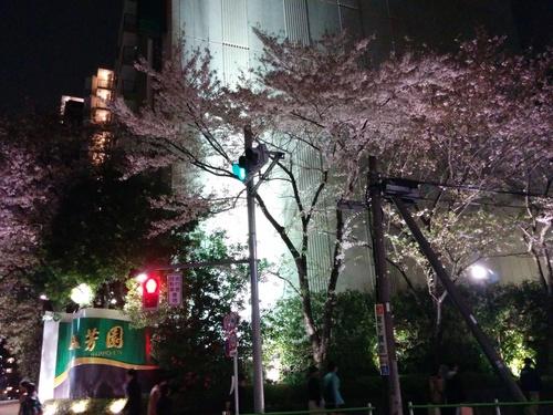 老舗シャトー勝沼のワインと夜桜ビュッフェ@八芳園_e0123104_8331959.jpg
