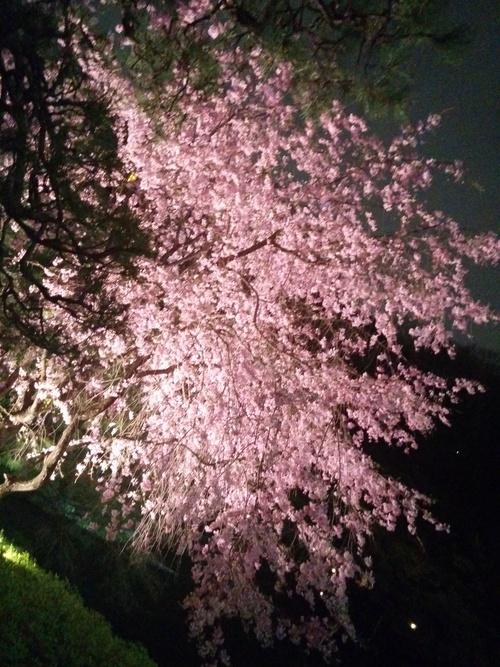 老舗シャトー勝沼のワインと夜桜ビュッフェ@八芳園_e0123104_905682.jpg